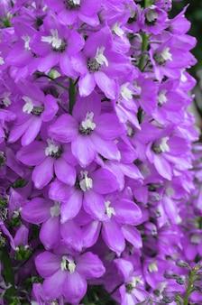 Fleur de delphinium bleu. fleur violette de delphinium dans un jardin d'été