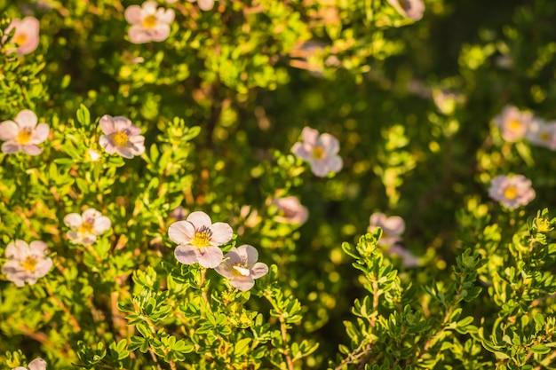 Fleur épanouie sur fond vert d'herbe et de buissons