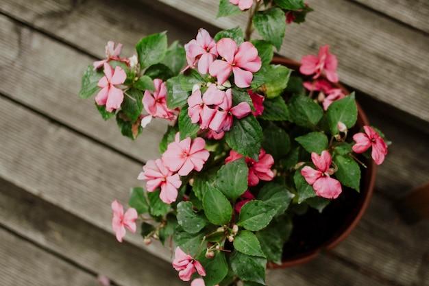 Fleur faite maison dans un pot avec des fleurs roses vue de dessus sur une table en bois.