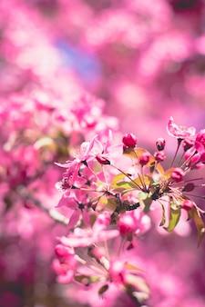 Fleur avec flou artistique
