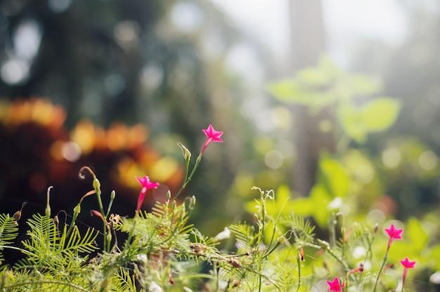 Fleur avec fond naturel