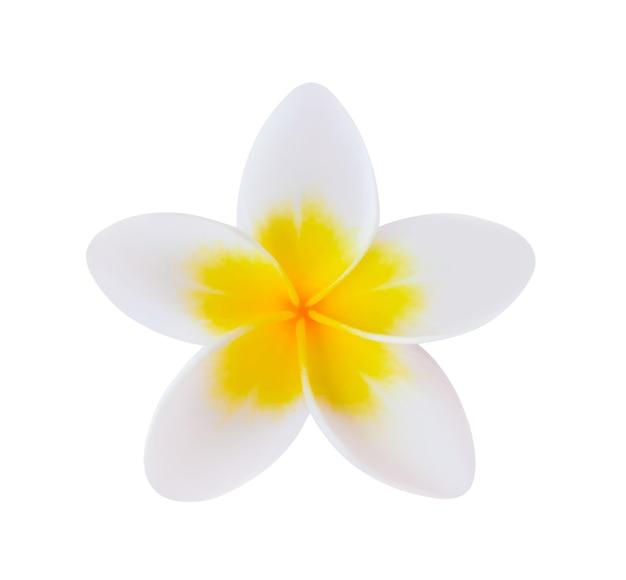 Fleur de frangipanier blanc isolé.