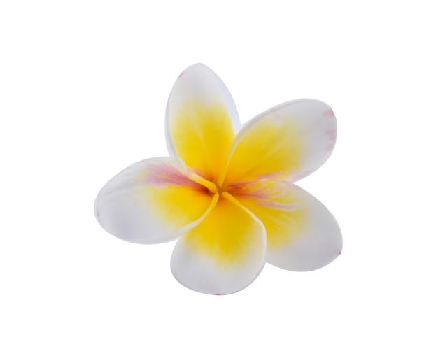 Fleur de frangipanier blanc isolé