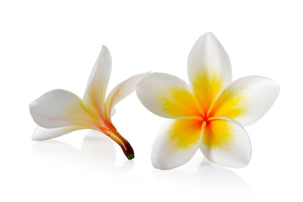 Fleur de frangipanier sur blanc isolé