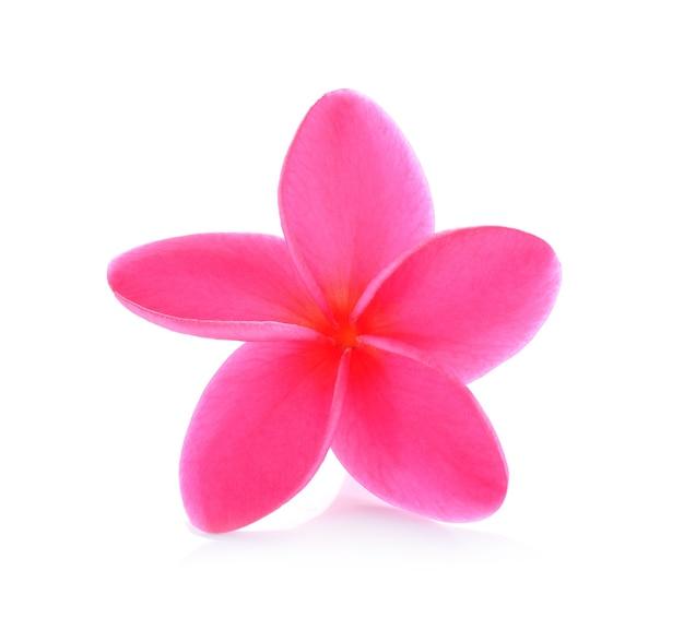 Fleur de frangipanier sur blanc
