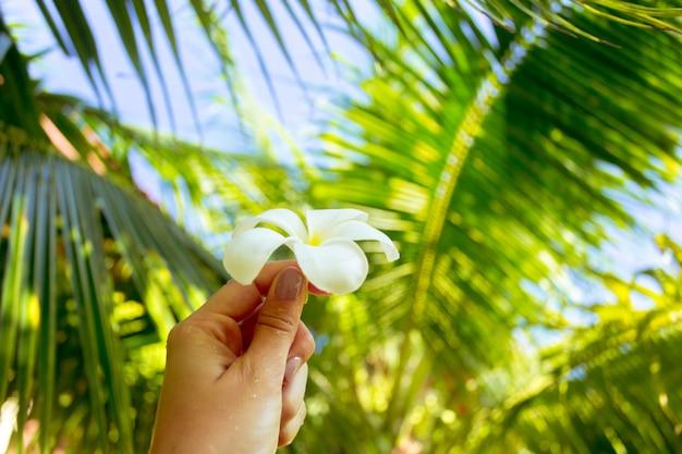 Fleur de frangipanier dans une main de femme