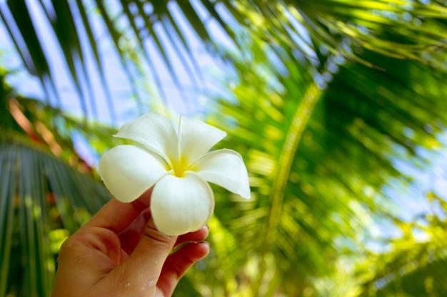 Fleur de frangipanier dans la main d'une femme