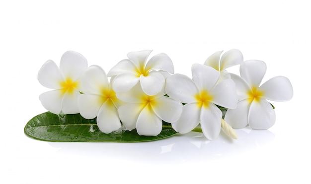 Fleur de frangipanier sur un espace blanc