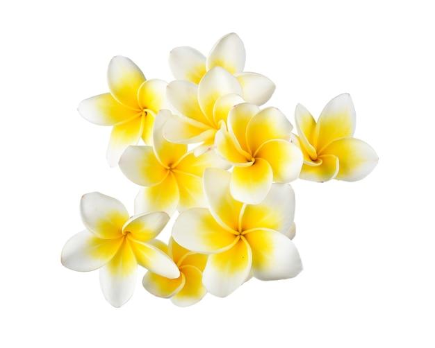 Fleur de frangipanier sur espace blanc