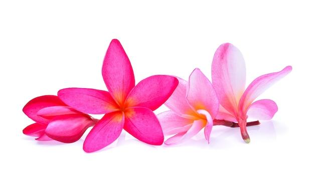 Fleur de frangipanier sur fond blanc