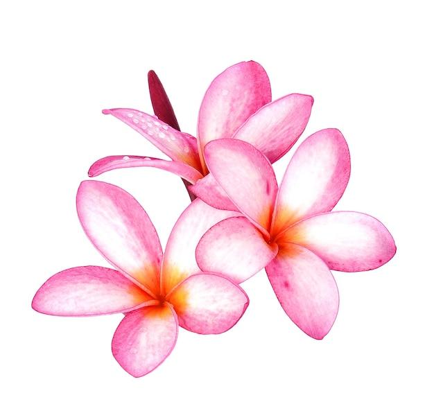 Fleur de frangipanier goutte d'eau isolé sur espace blanc