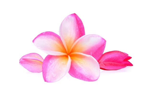 Fleur de frangipanier avec des gouttelettes d'eau isolé sur blanc