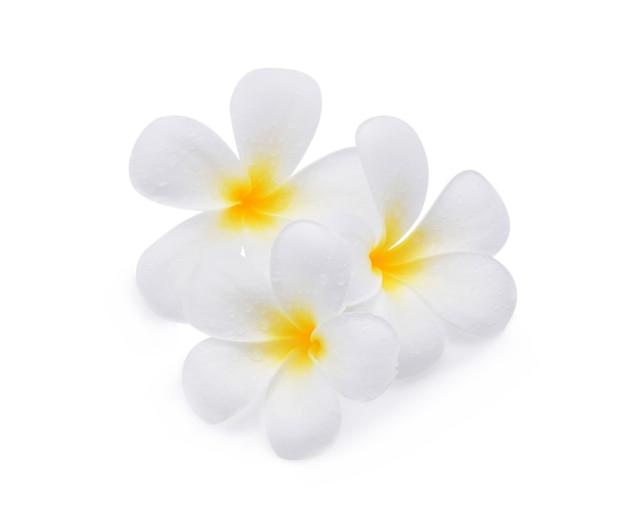 Fleur de frangipanier avec des gouttelettes d'eau