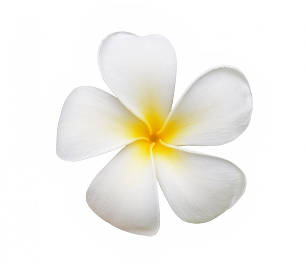 Fleur de frangipanier isolé sur blanc