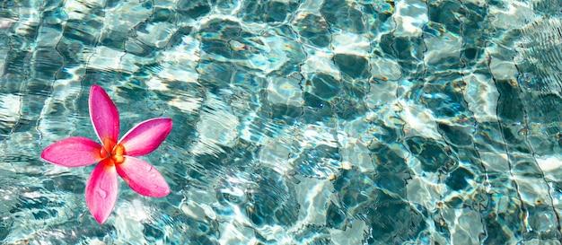 Fleur de frangipanier rouge dans la piscine d'eau