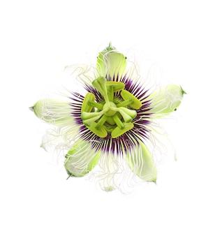 Fleur de fruit de la passion isolé sur blanc