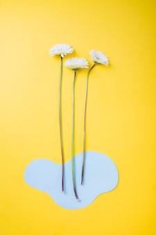 Fleur de gerbera blanche avec du papier découpé bleu sur fond jaune