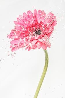 Fleur de gerbera en floraison naturelle rose
