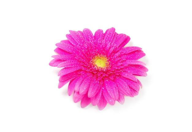 Fleur de gerbera isolé sur une surface blanche
