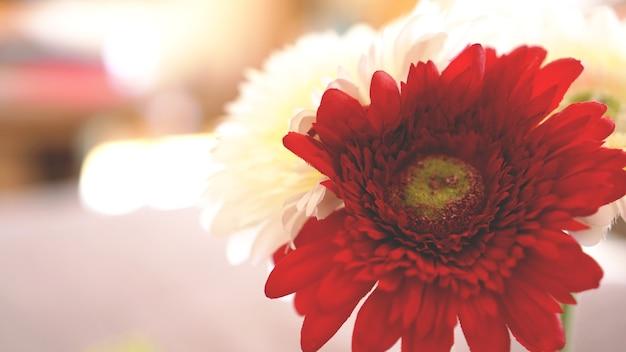 Fleur de gerbera isolée en flou artistique. arrière-plan flou ensoleillé