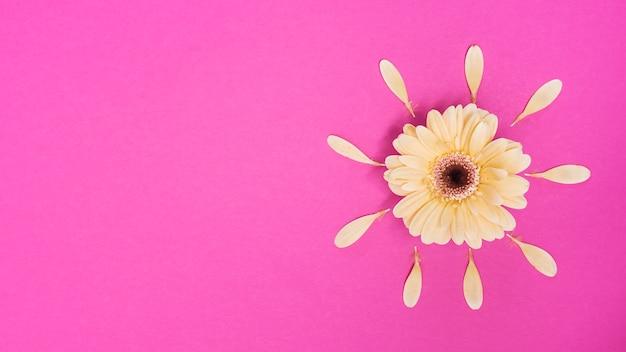 Fleur de gerbera avec pétales sur table