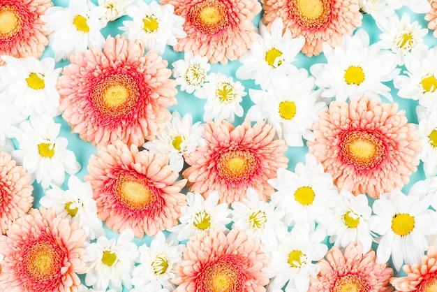 Fleur de gerbera rose avec fond de fleurs blanches