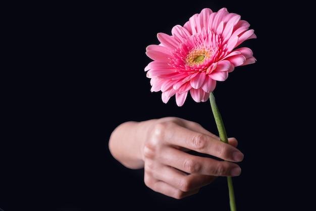 Fleur de gerbera rose isolée