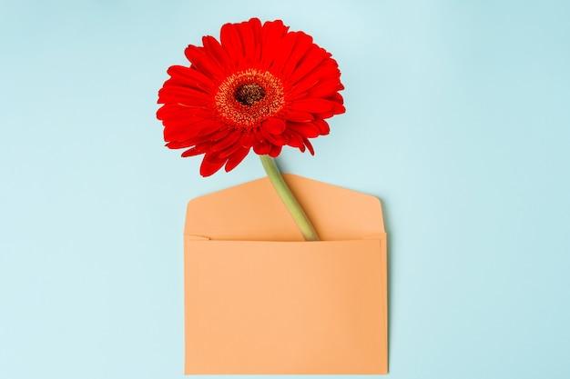 Fleur de gerbera rouge dans l'enveloppe. un symbole du printemps et des vacances romantiques