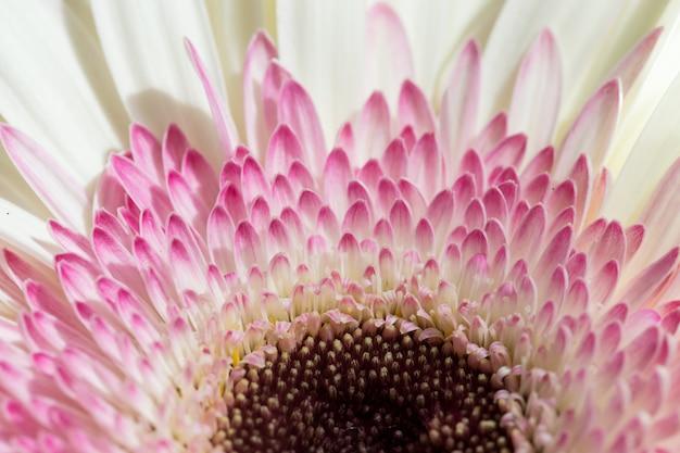 Fleur de gerbera se bouchent
