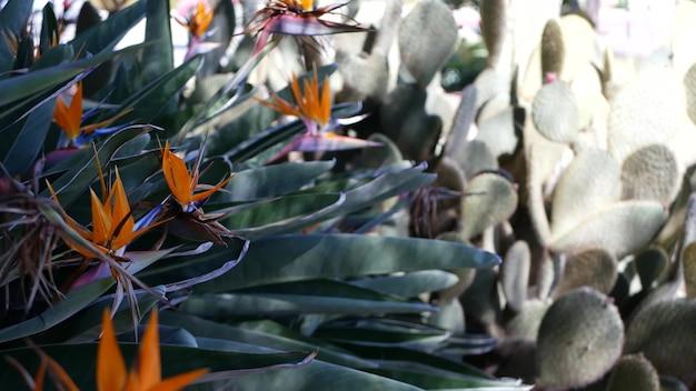 Fleur de grue tropicale oiseau de paradis strelitzia, california usa. fleur florale exotique orange