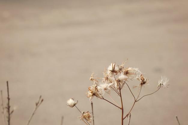 Fleur d'herbe en corée