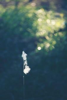 Fleur d'herbe dans le champ de la nature, image de filtre vintage