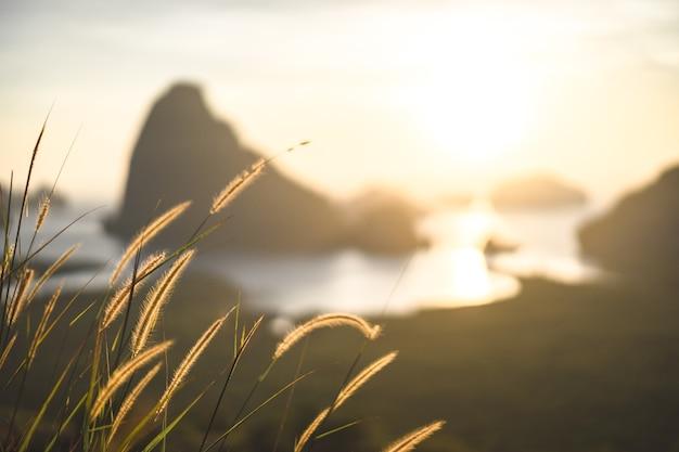 Fleur d'herbe dans la lumière du soleil jaune chaud, fleurs sauvages brunes, le fond naturel.