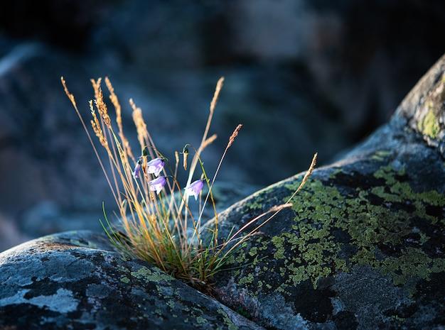 Fleur et herbe sur la montagne de pierre grise