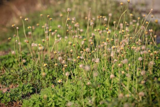 Fleur et herbe pour le fond