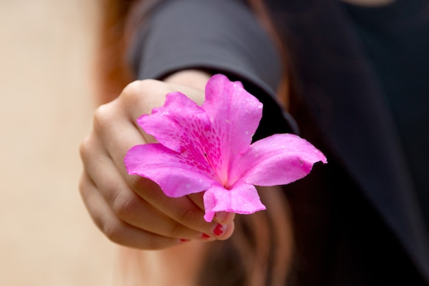 Fleur d'hibiscus rose dans la main d'un enfant à rio de janeiro, brésil.