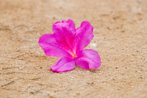 Fleur d'hibiscus rose jetée sur le sol en terre battue à rio de janeiro, au brésil.