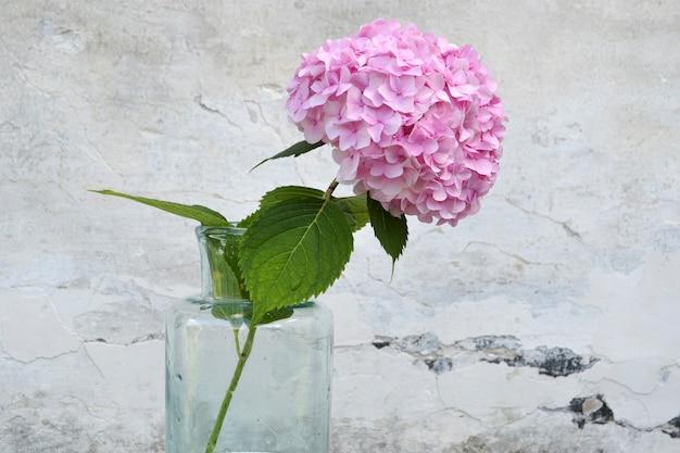 Fleur d'hortensia rose dans un vase sur un mur gris.