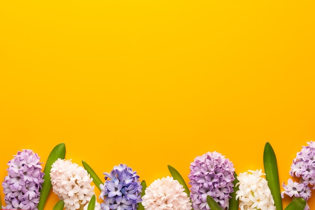 Fleur de jacinthe rose, fleurs de printemps. le parfum des jacinthes en fleurs est un symbole du début du printemps.