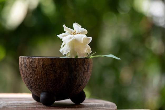 Fleur de jasmin du cap sur la nature.