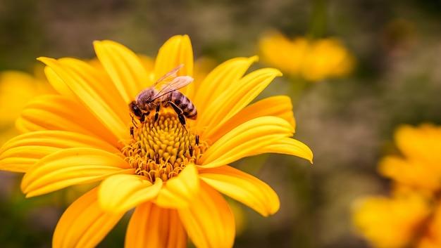 Fleur jaune avec abeille à l'intérieur