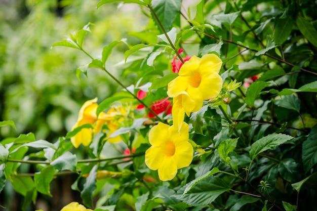 Fleur jaune sur arbre