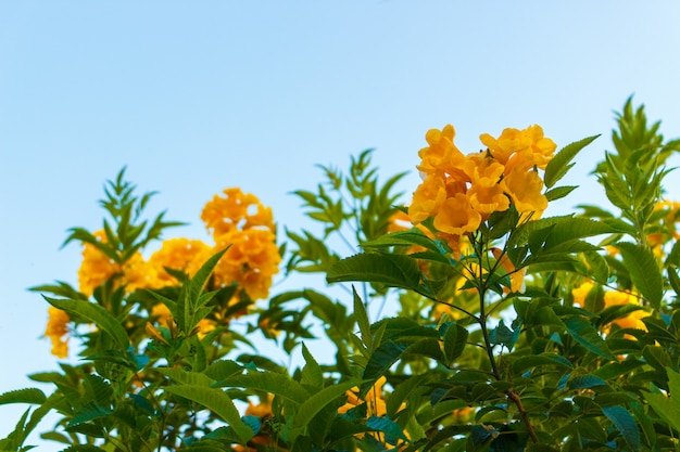 Fleur jaune avec un ciel bleu sans nuage