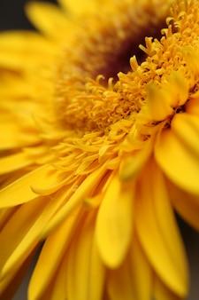 Fleur jaune close up