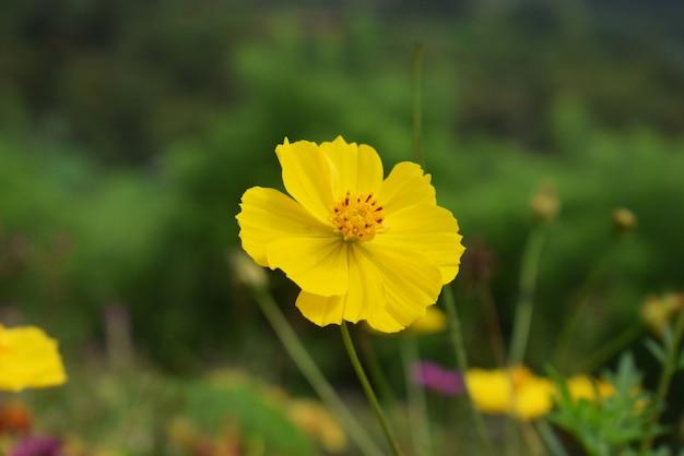 Fleur jaune dans le jardin