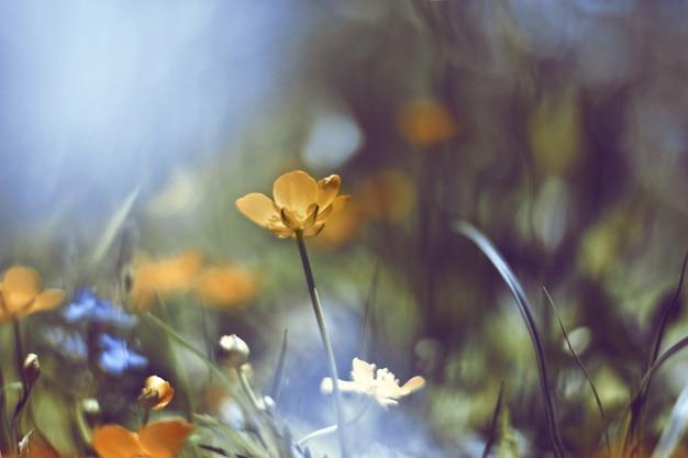 Fleur jaune avec un fond diffus