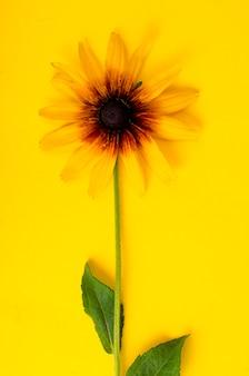 Fleur jaune sur fond de papier brillant. photo