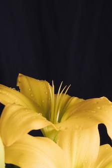 Fleur jaune fraîche en rosée