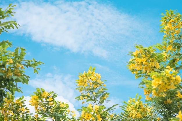 Fleur jaune gros plan sur un arbre vert sur fond de ciel bleu avec espace de copie