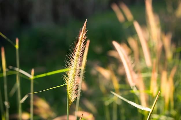 Fleur jaune herbe impact soleil lumière nature fond.